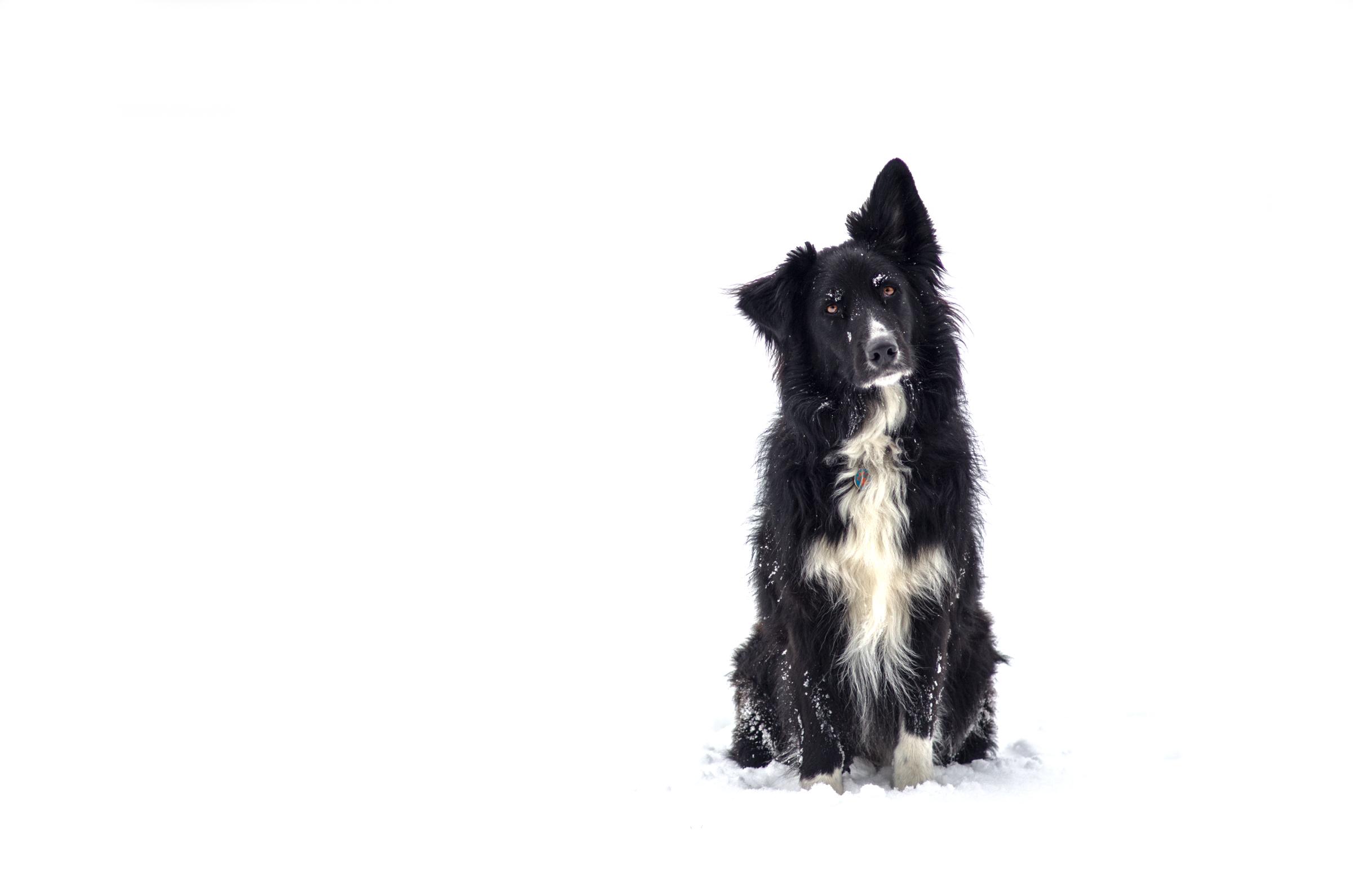 Pr1mo in de sneeuw