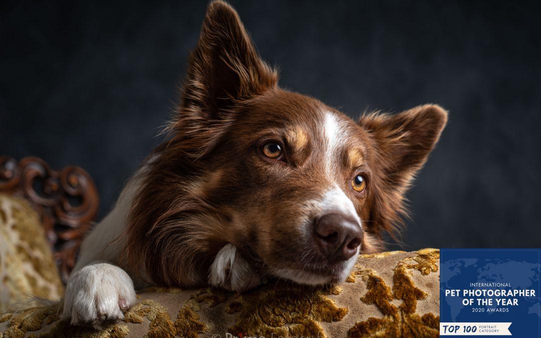 Top 100 Portret PetPhotographersclub